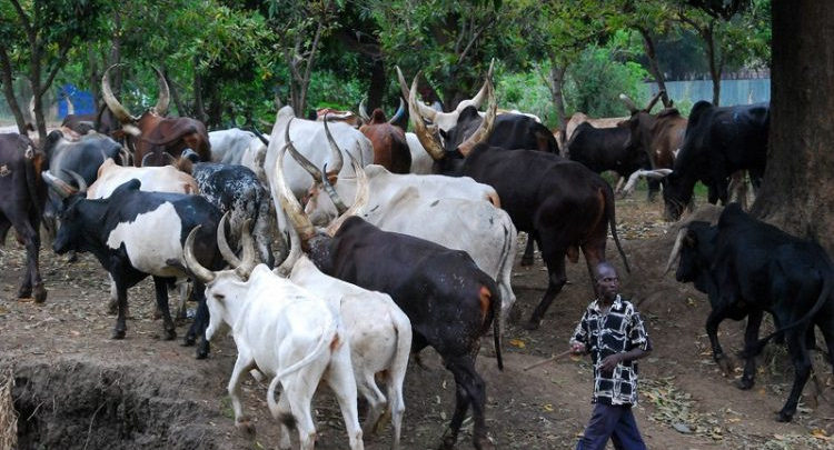 Middle-aged woman allegedly gang-raped by herdsmen in Anambra, dies in Ebonyi